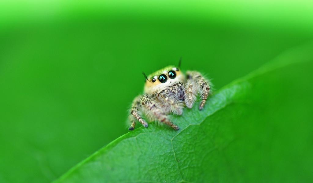 Una pequeña hermosa araña - 1024x600
