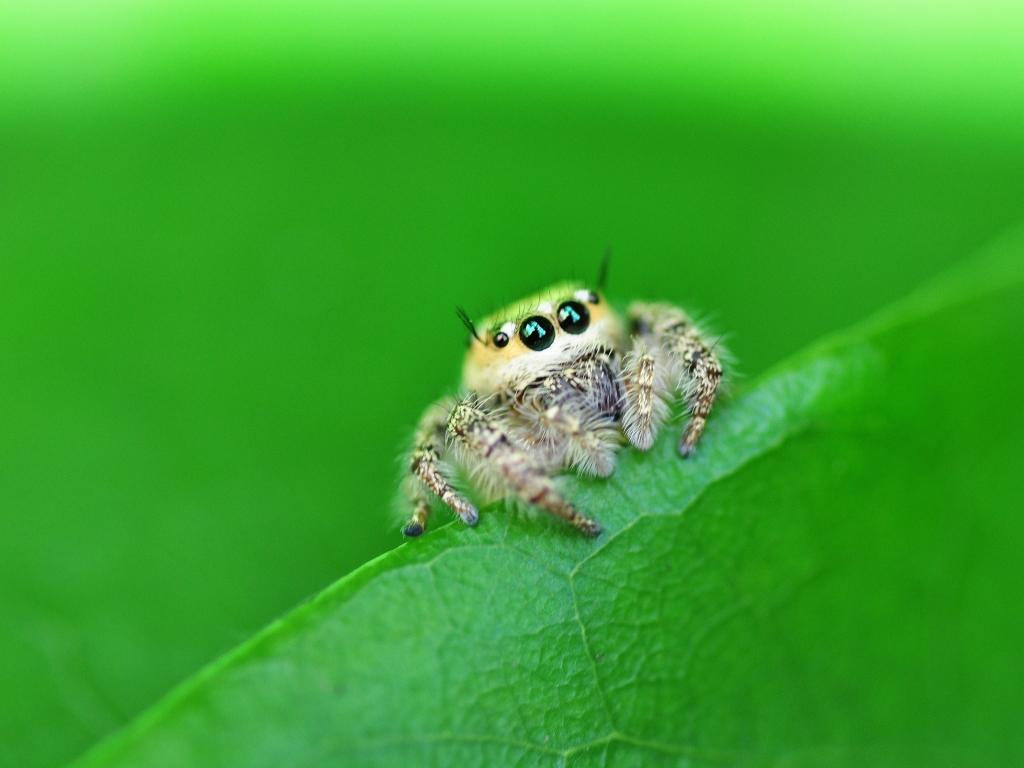 Una pequeña hermosa araña - 1024x768