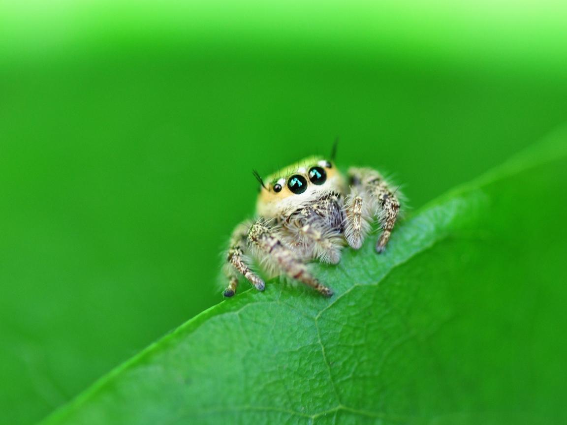Una pequeña hermosa araña - 1152x864