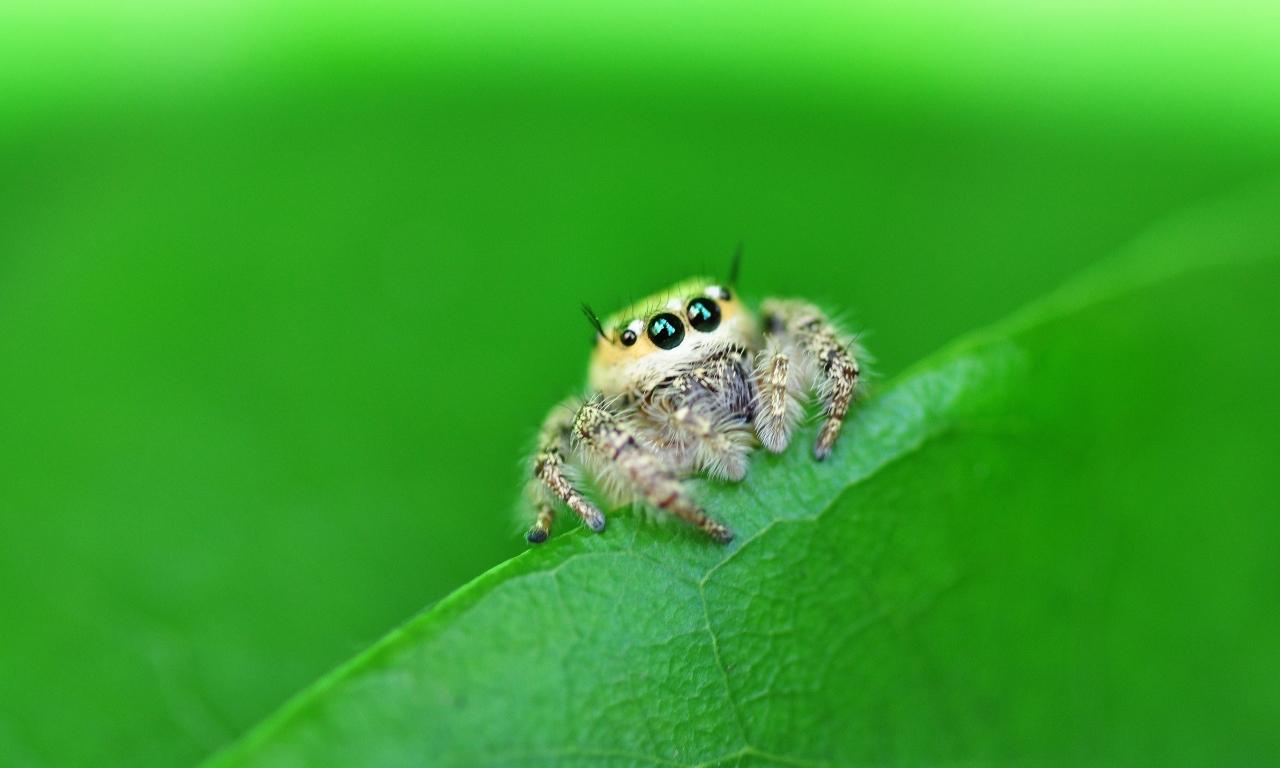 Una pequeña hermosa araña - 1280x768