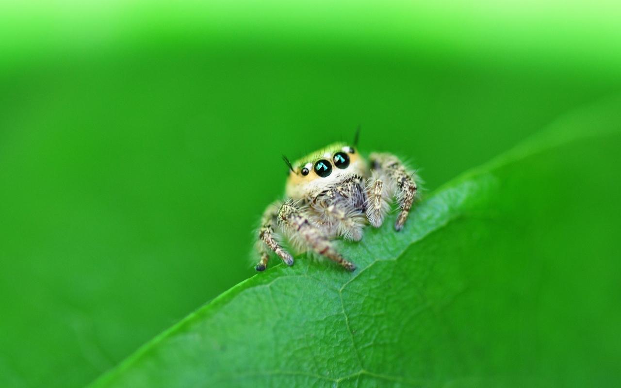 Una pequeña hermosa araña - 1280x800