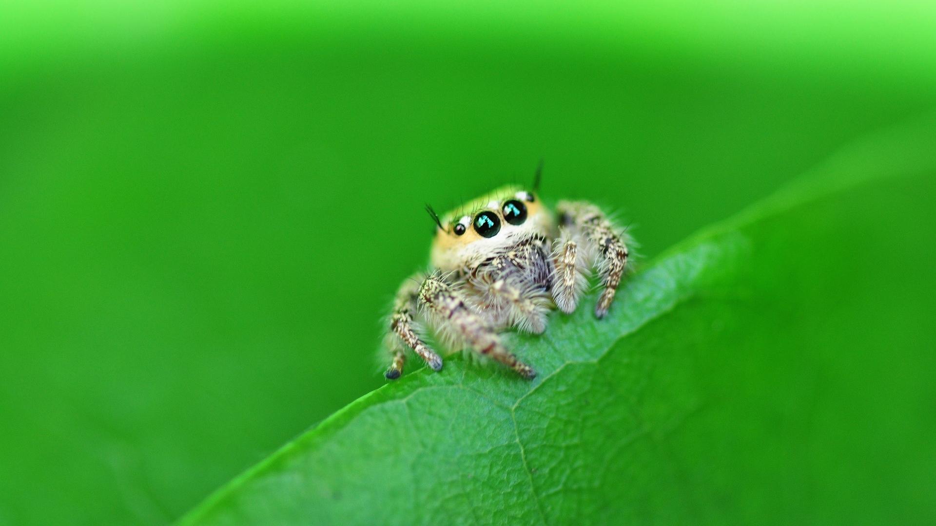 Una pequeña hermosa araña - 1920x1080
