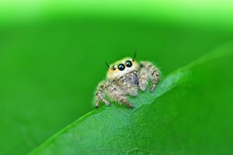 Una pequeña hermosa araña - 480x320