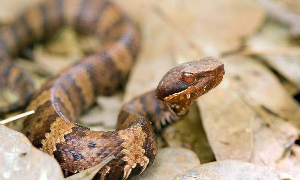 Una serpiente aterradora - 1000x600