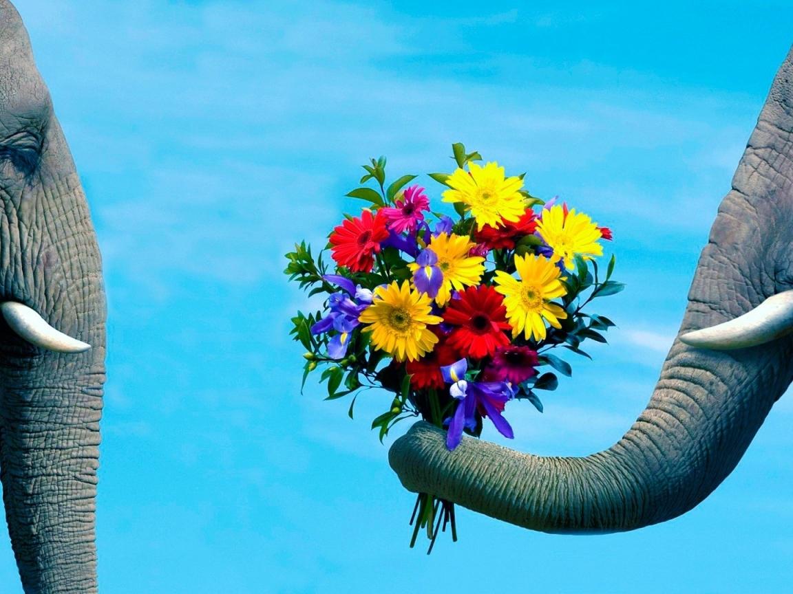 Amor en los animales - 1152x864