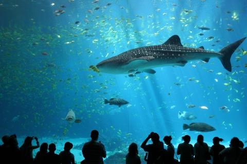 Animales marinos en acuario - 480x320
