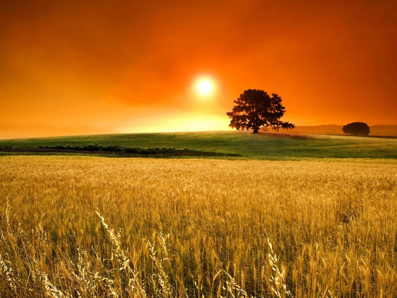 Atardecer en campos de trigo - 1280x960