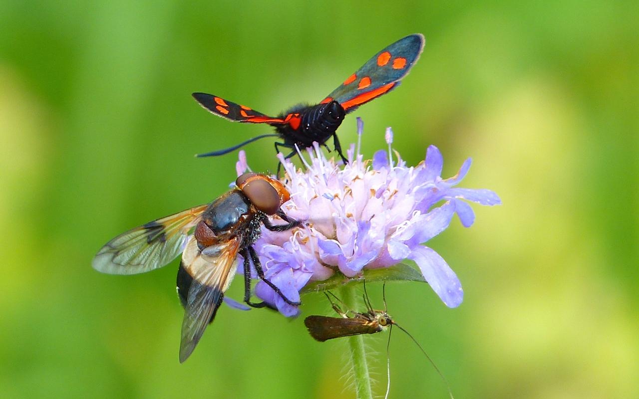 Bellas fotos macro de insectos - 1280x800