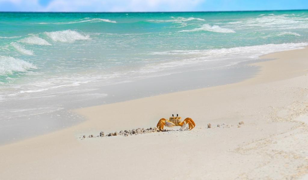 Cangrejo caminando en la playa - 1024x600