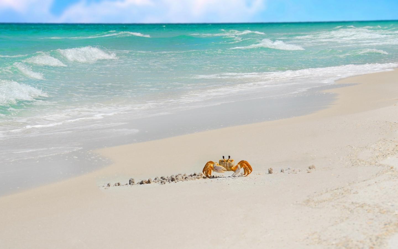 Cangrejo caminando en la playa - 1440x900