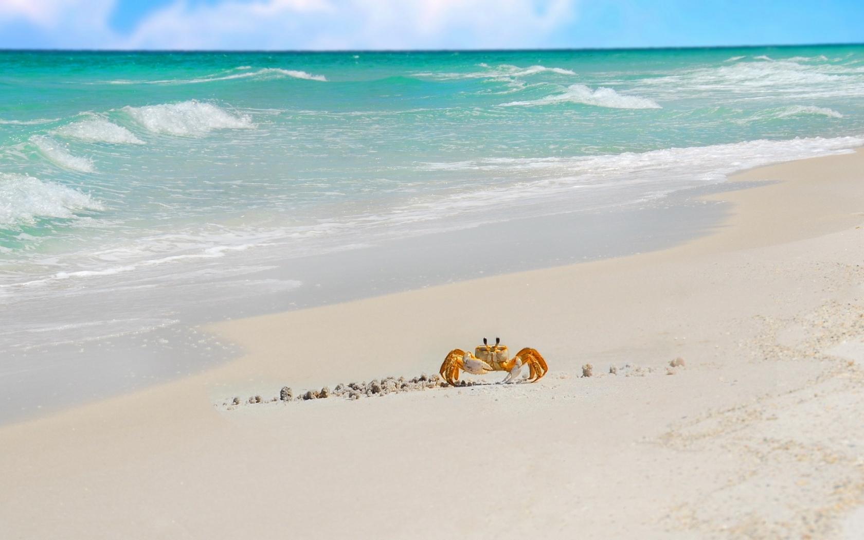 Cangrejo caminando en la playa - 1680x1050