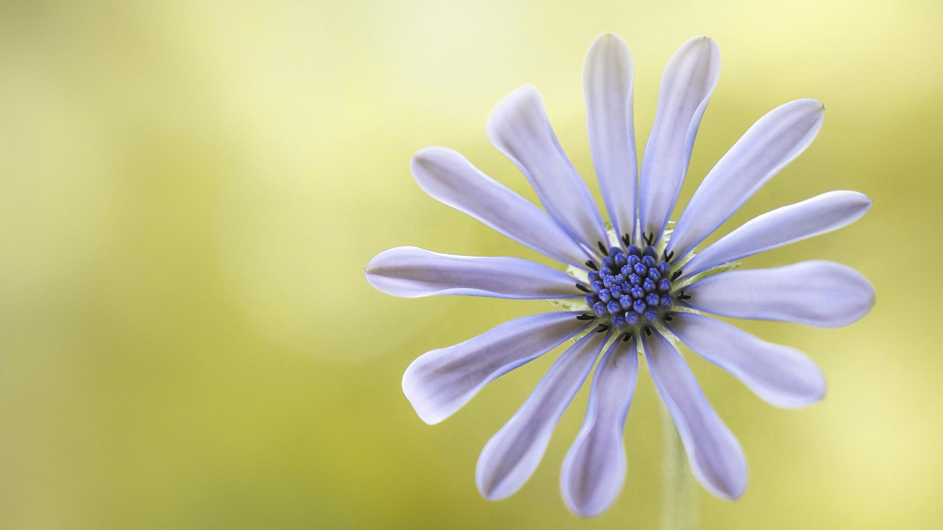 Flor púrpura - 1920x1080