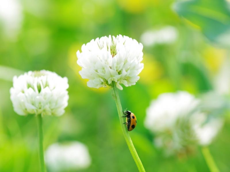 Flor y unos insectos - 800x600