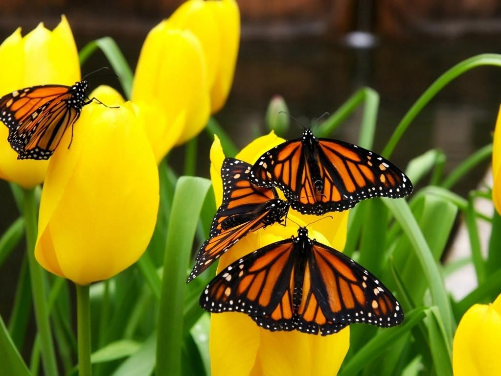 Flores amarillas y mariposas - 1024x768