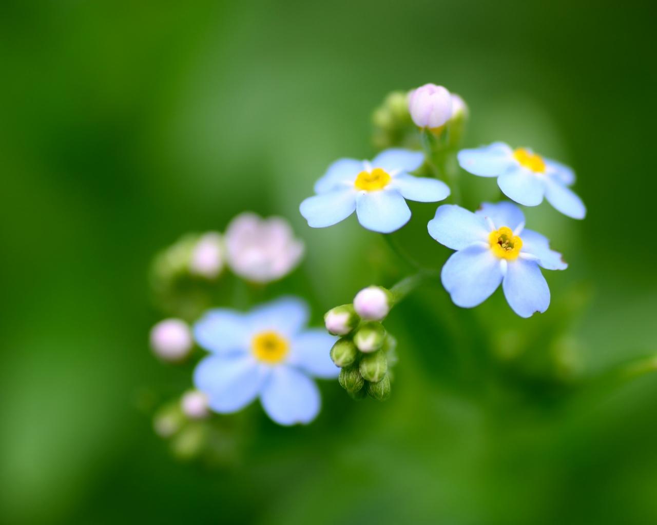 Flores azules - 1280x1024