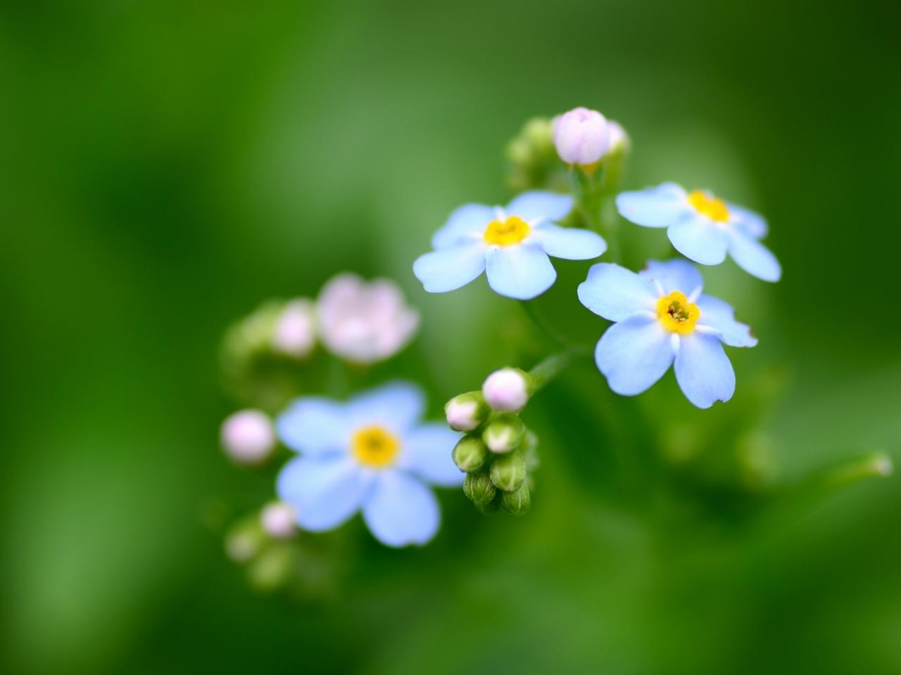 Flores azules - 1280x960