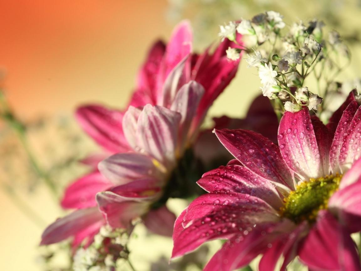 Flores con lente macro - 1152x864
