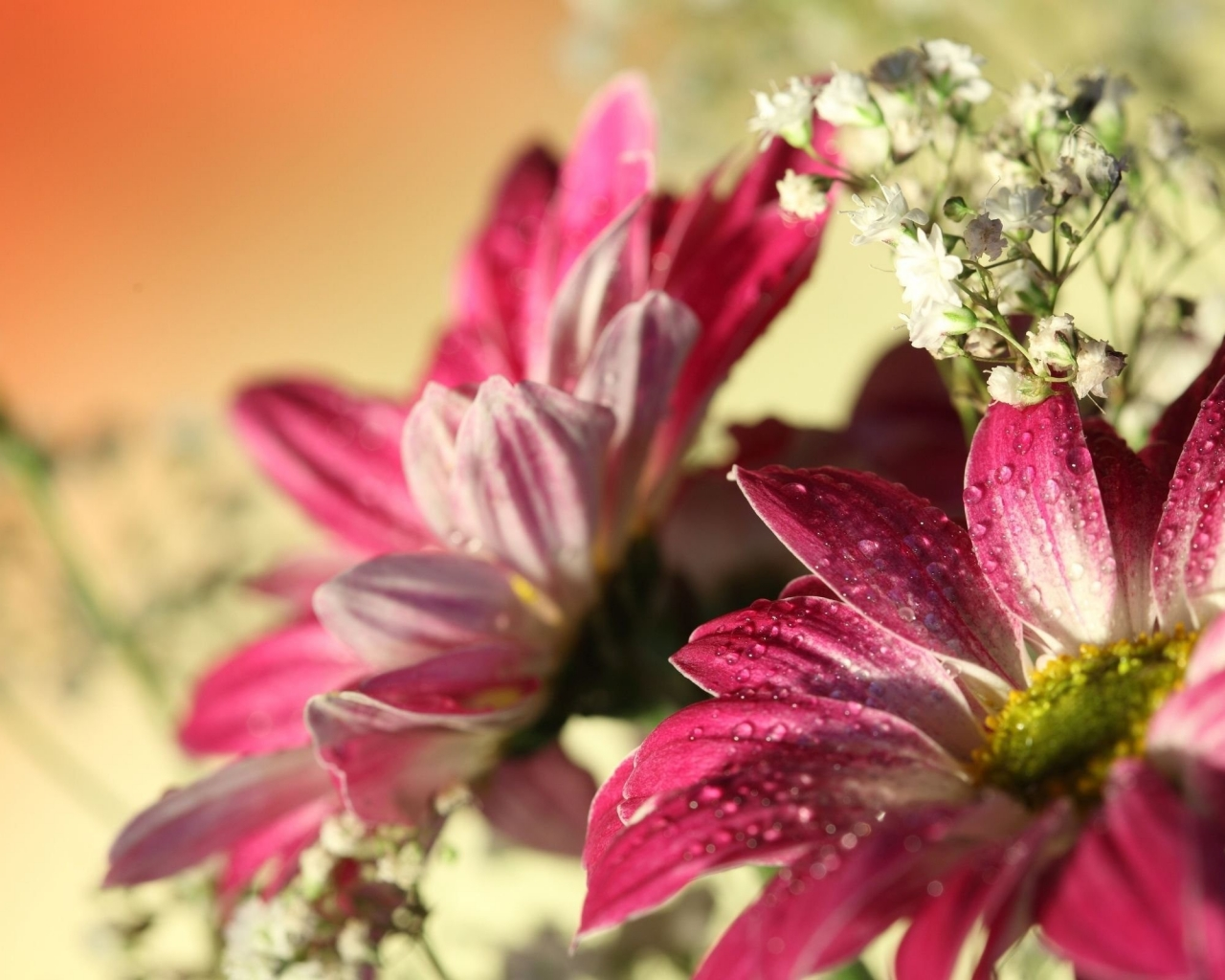 Flores con lente macro - 1280x1024