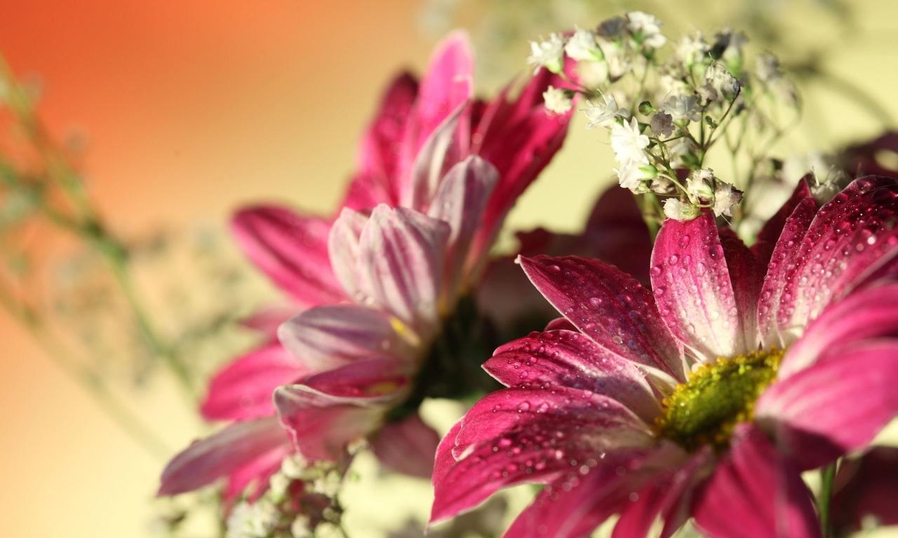 Flores con lente macro - 1280x768