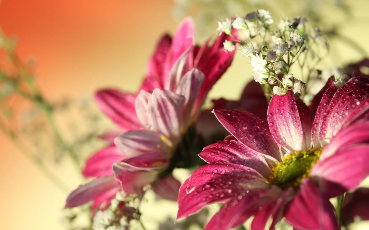 Flores con lente macro - 1280x800