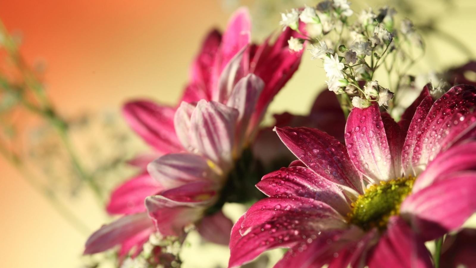 Flores con lente macro - 1600x900