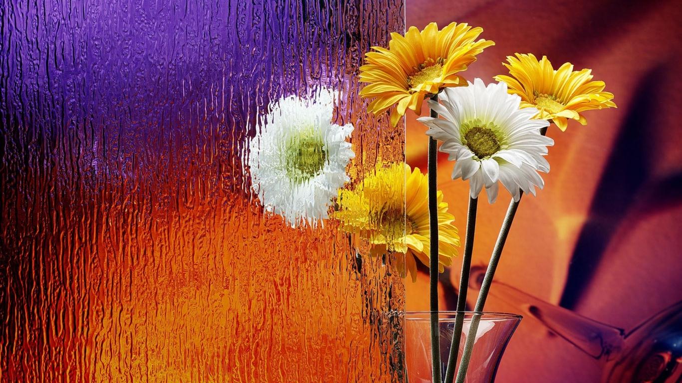 Flores en el escritorio - 1366x768