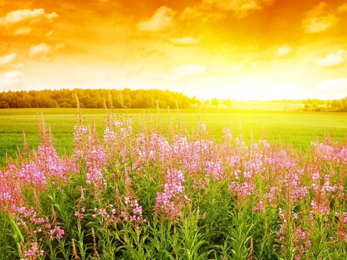 Flores rosadas en paisaje - 1152x864