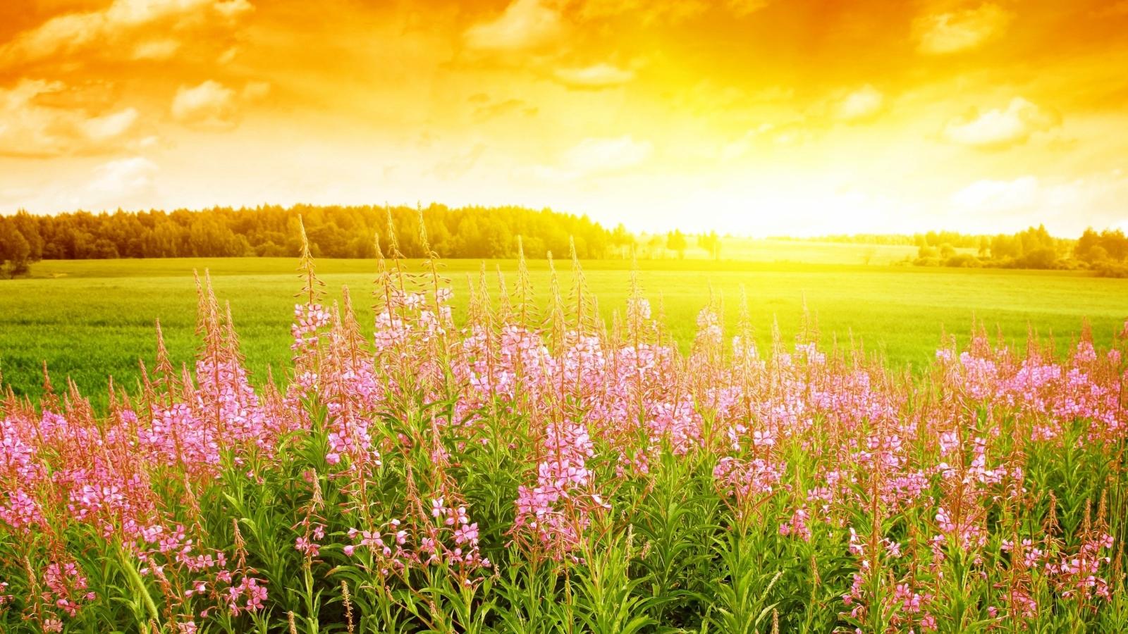 Flores rosadas en paisaje - 1600x900