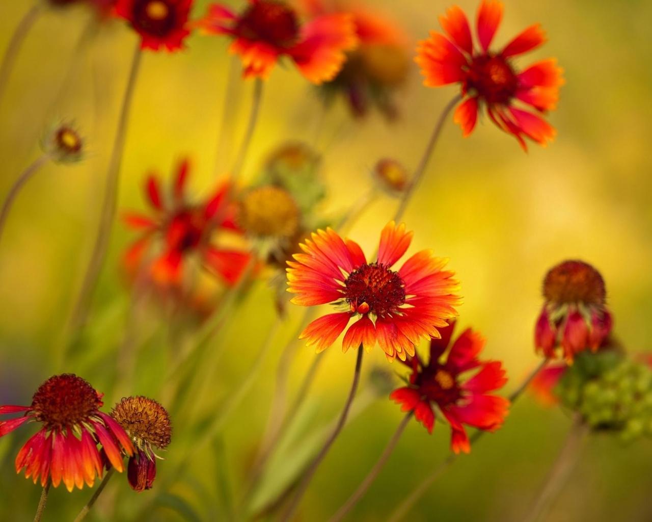 Flores y enfoques - 1280x1024