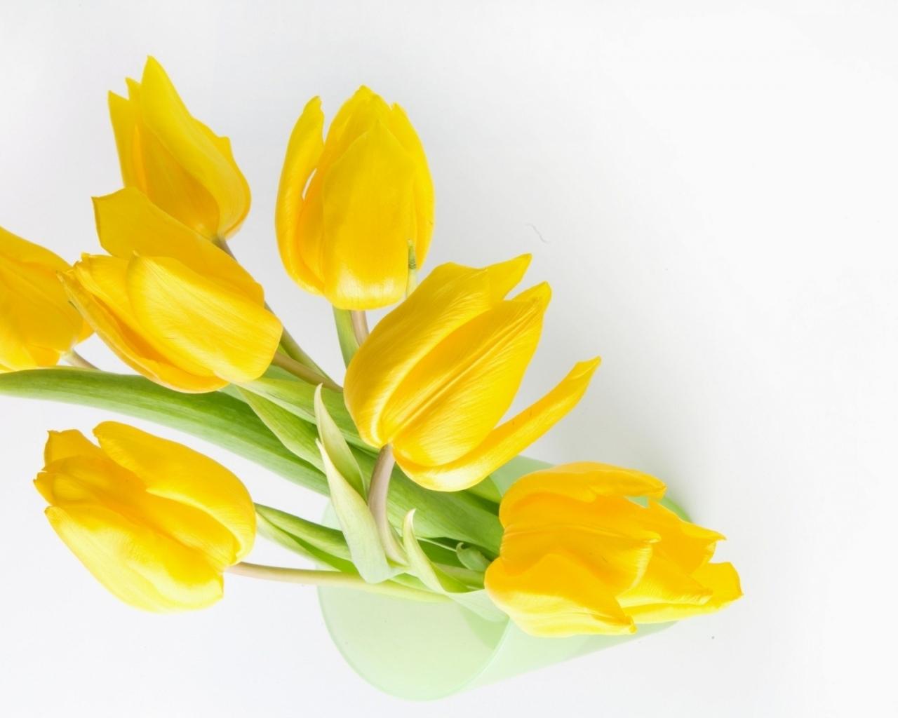 Fondo blanco y flores amarillas - 1280x1024