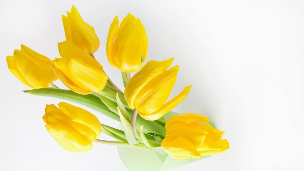 Fondo blanco y flores amarillas - 1280x720