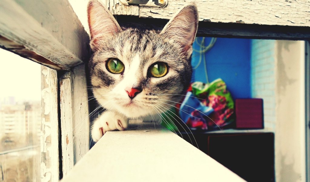 Foto artística de gatos - 1024x600