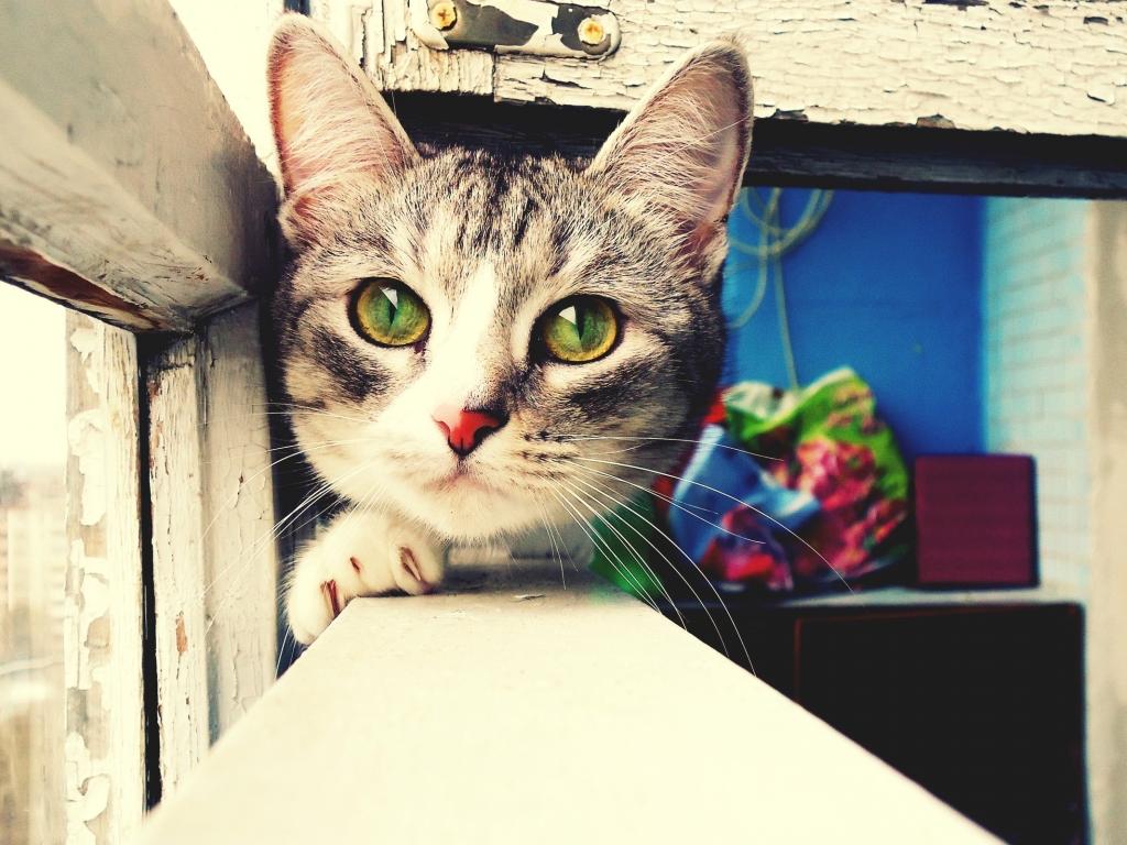 Foto artística de gatos - 1024x768
