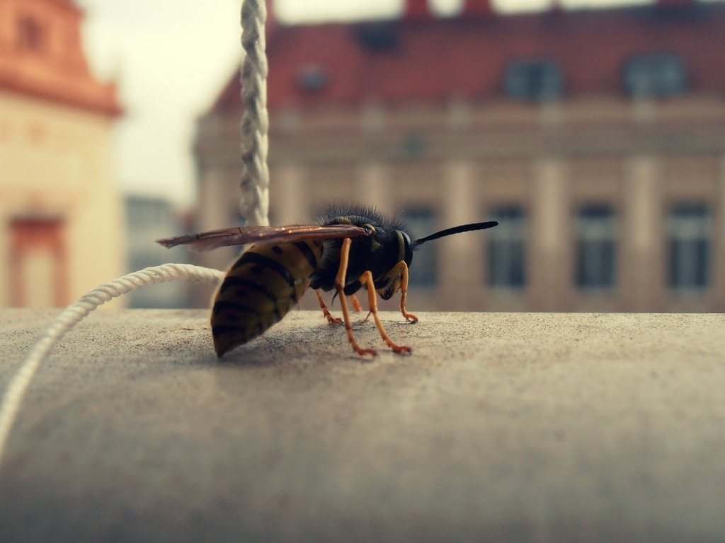 Foto de abeja en macro - 1024x768