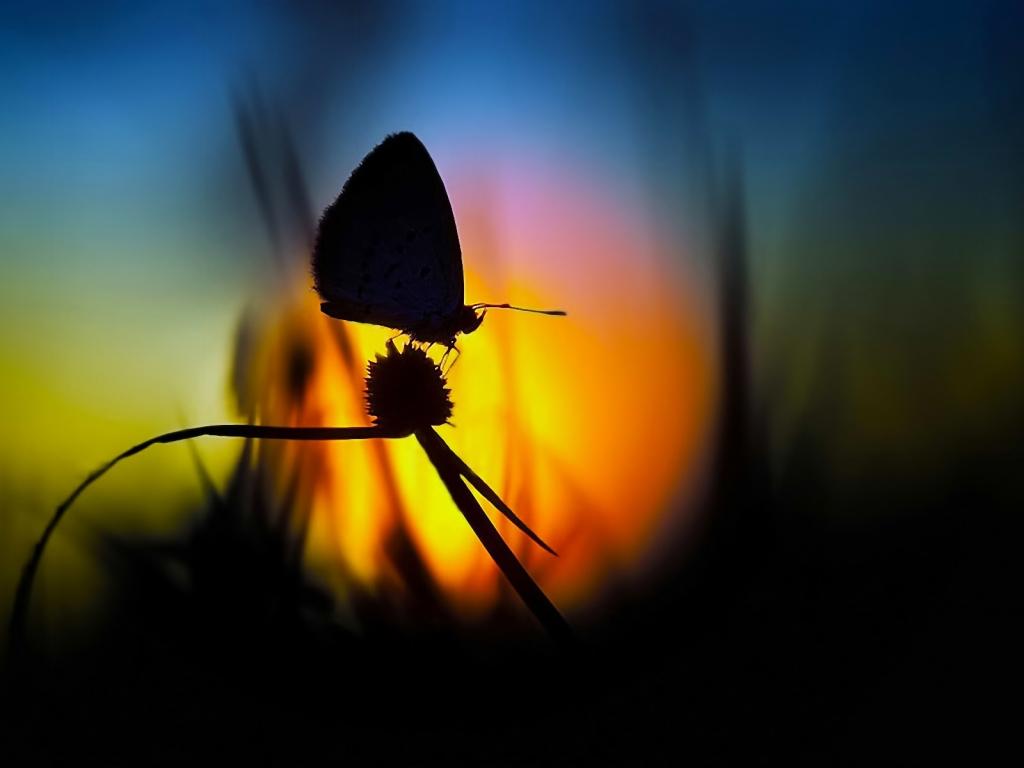 Foto de mariposa en contraluz - 1024x768