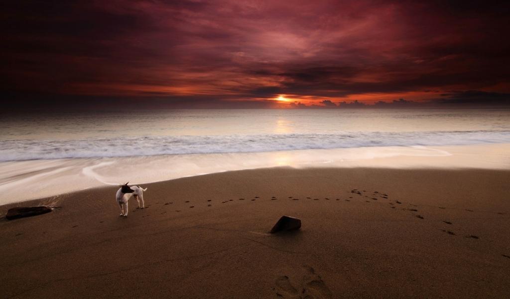 Fotografia con flash en playas - 1024x600