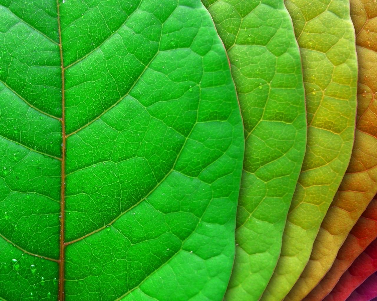 Hojas de árbol de colores - 1280x1024