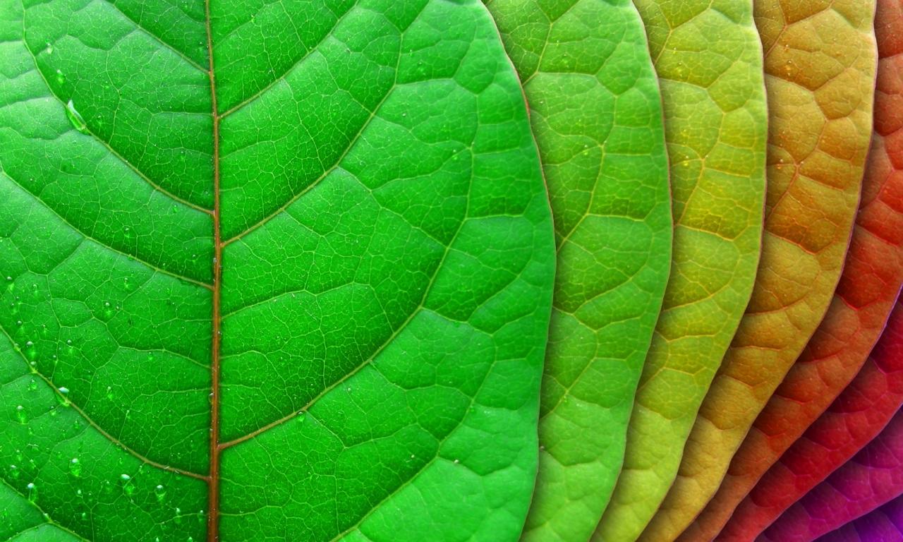 Hojas de rbol de colores hd 1280x768 imagenes - Color verde hoja ...
