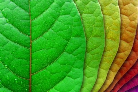 Hojas de árbol de colores - 480x320