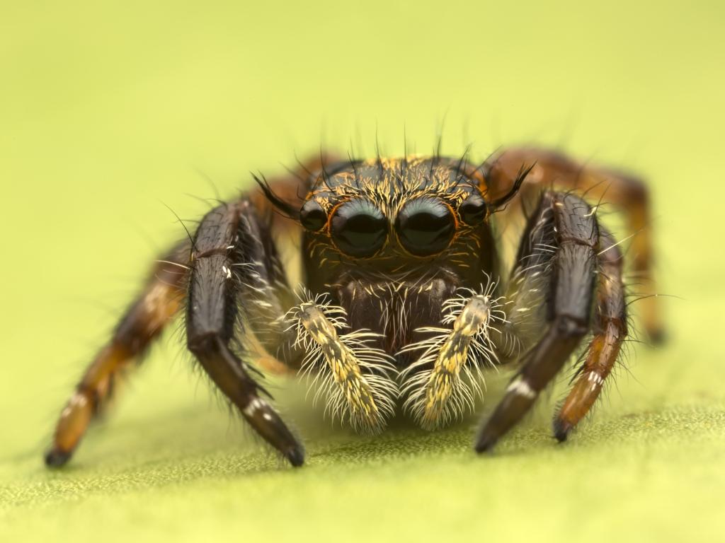 Insecto en macro - 1024x768