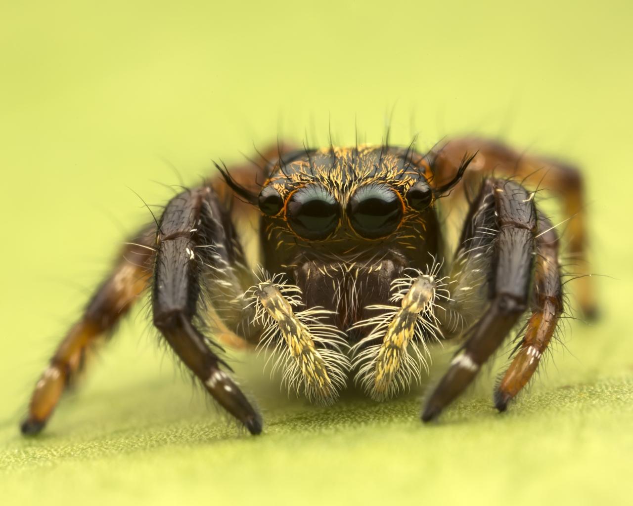 Insecto en macro - 1280x1024