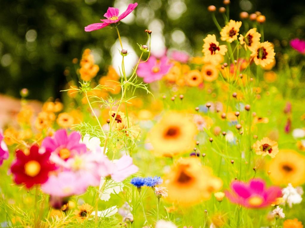 flores jardin categorias colores paisajes flores plantas y frutas