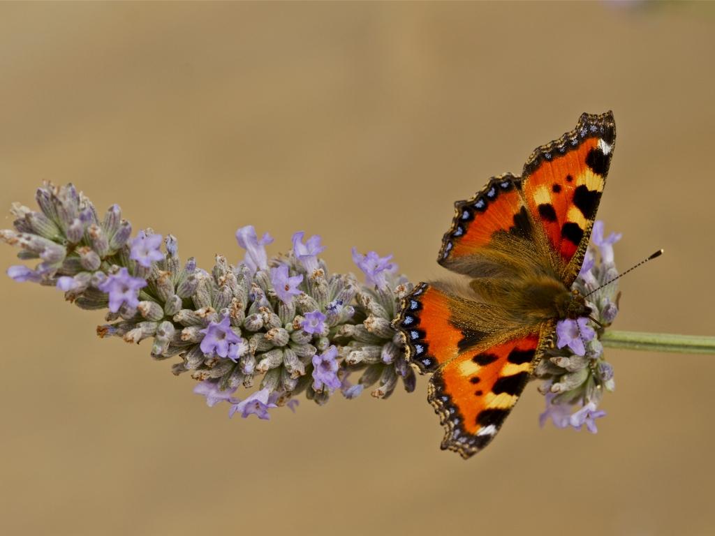 Mariposa color Naranja - 1024x768