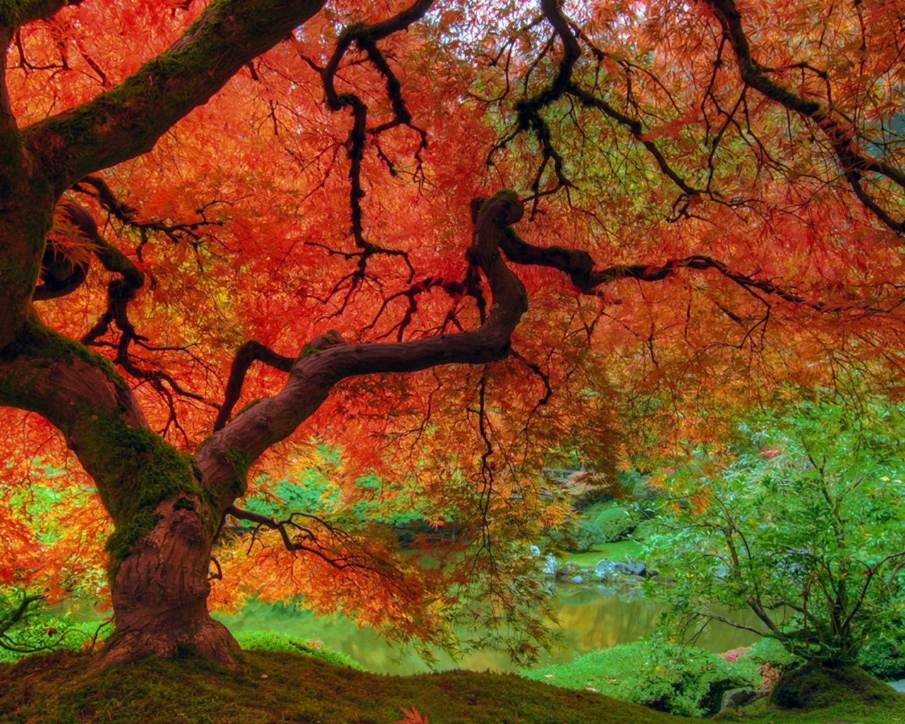 Otoño colorido - 1280x1024