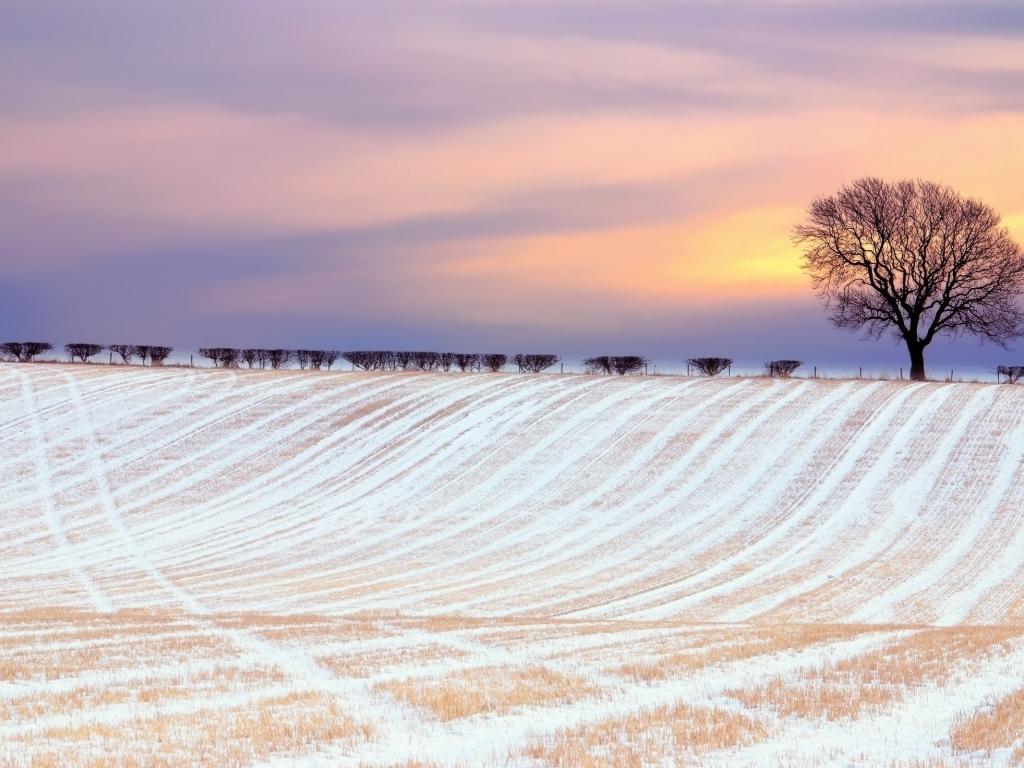 Paisajes increíbles en nieve - 1024x768