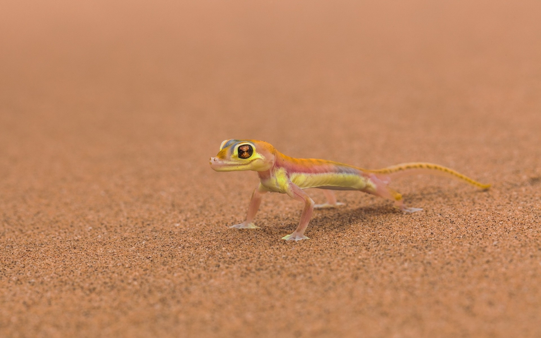 Pequeño reptil - 1440x900
