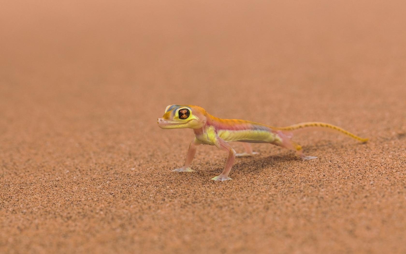Pequeño reptil - 1680x1050