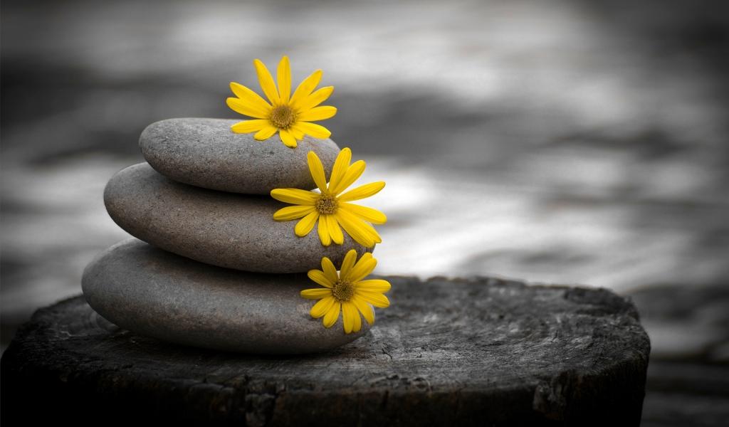 Piedras y flores amarillas - 1024x600