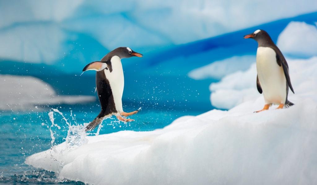 Pingüinos saltando - 1024x600