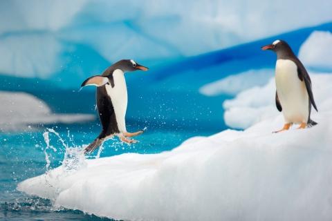 Pingüinos saltando - 480x320